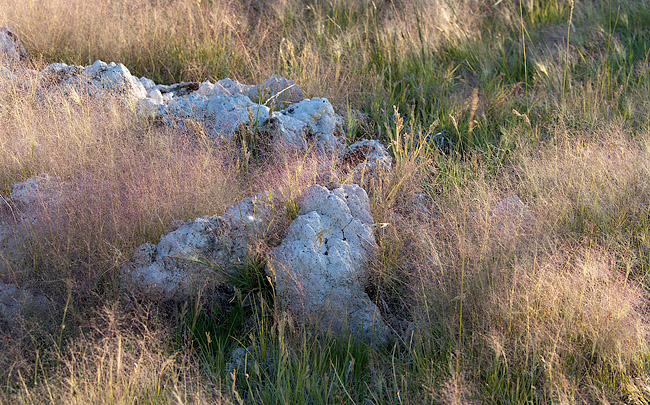 mono grasses