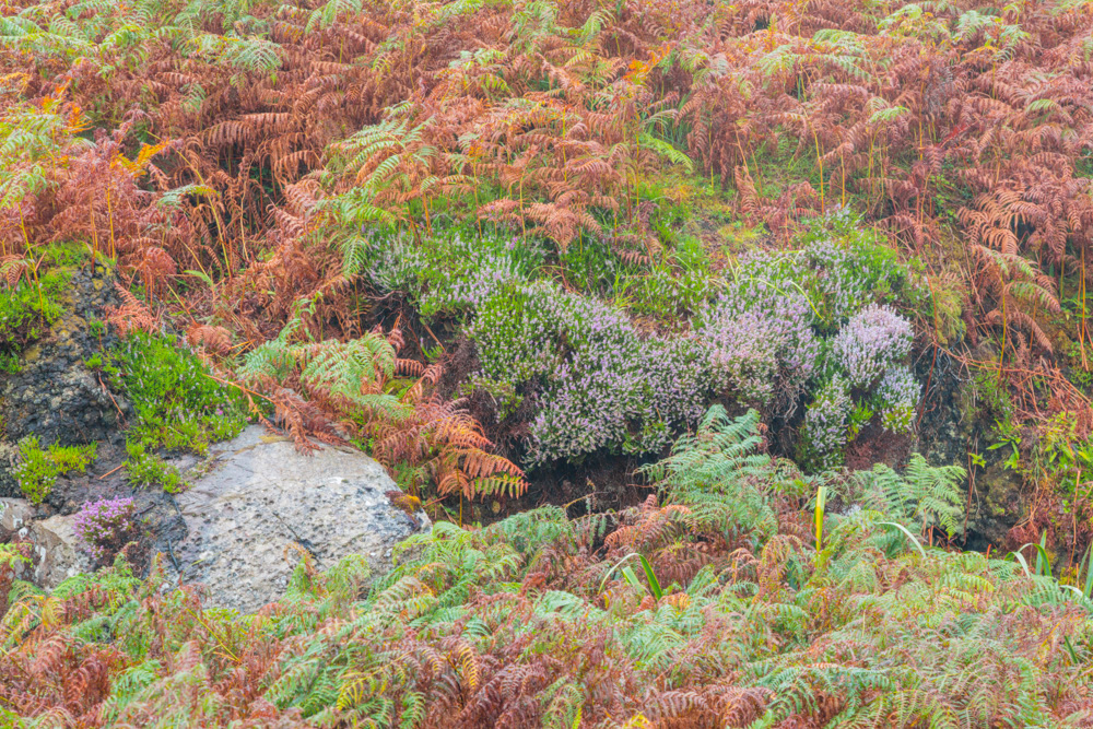 heather and ferns