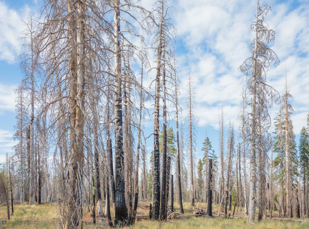 lassen burned forest