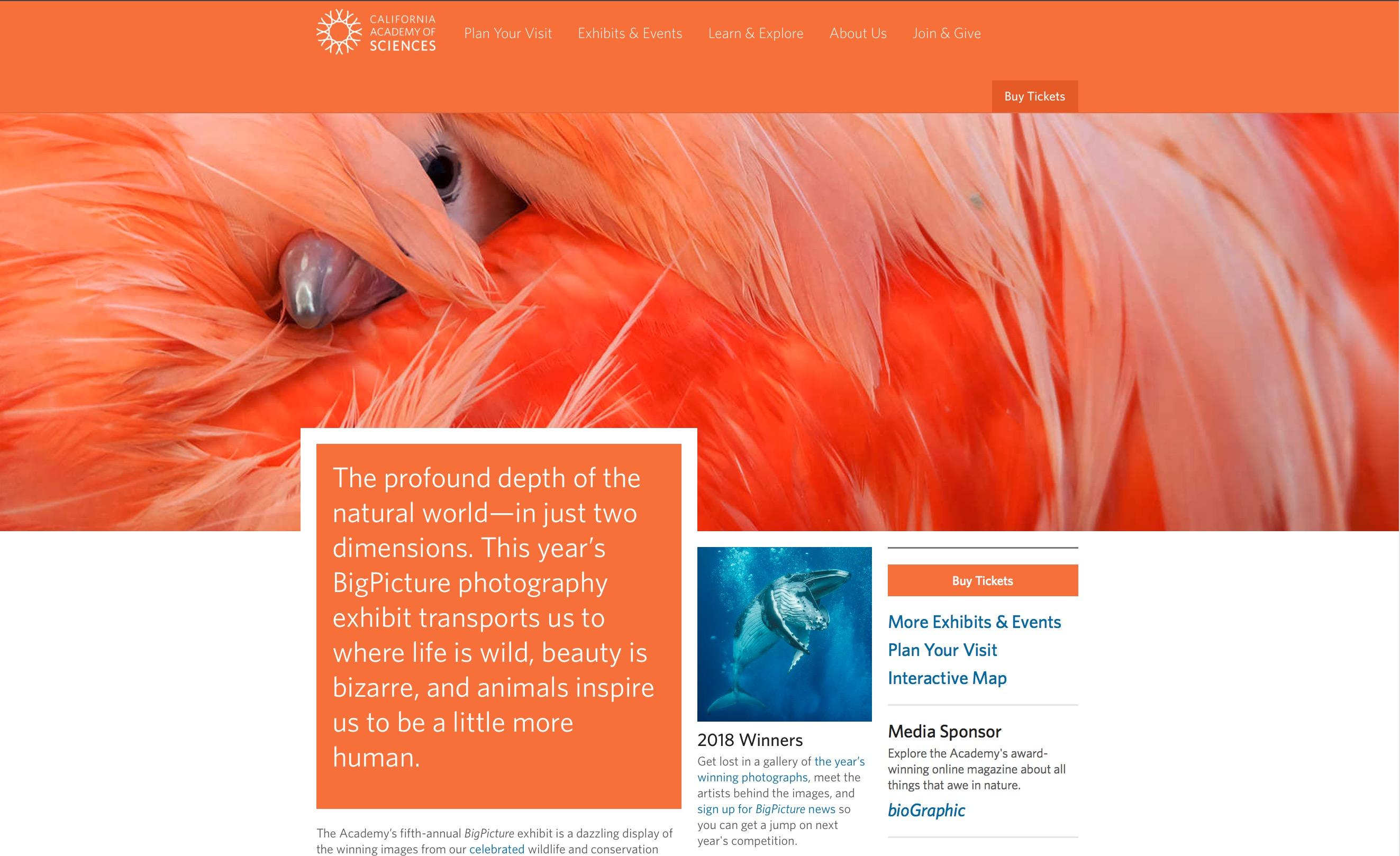CAS website